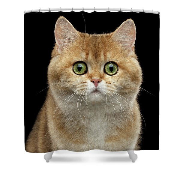 Close-up Portrait Of Golden British Cat With Green Eyes Shower Curtain