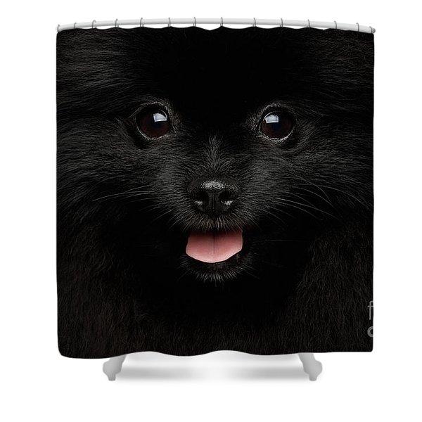 Close-up Portrait Of Happy Pomeranian Spitz Dog Shower Curtain