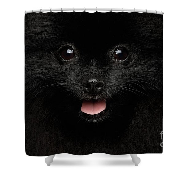 Close-up Portrait Of Happy Pomeranian Spitz Dog Shower Curtain