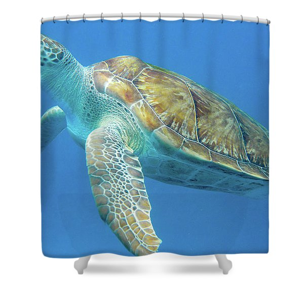 Close Up Sea Turtle Shower Curtain
