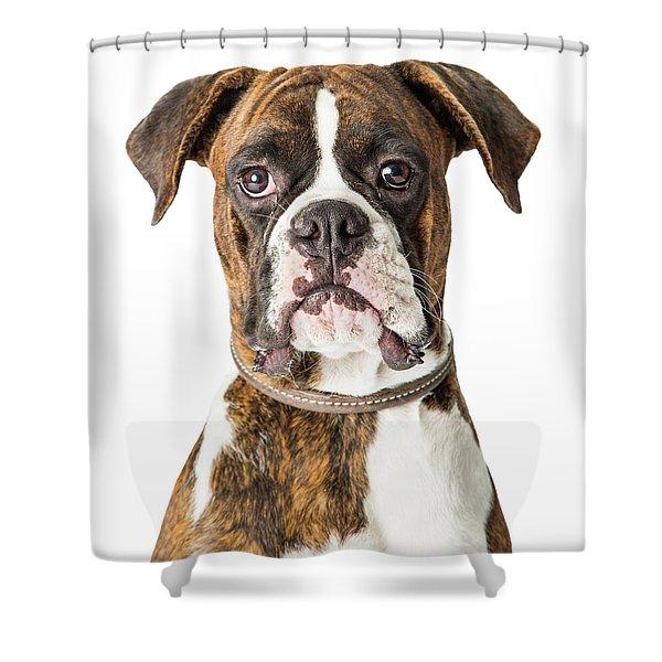 Closeup Boxer Dog Looking Forward Shower Curtain