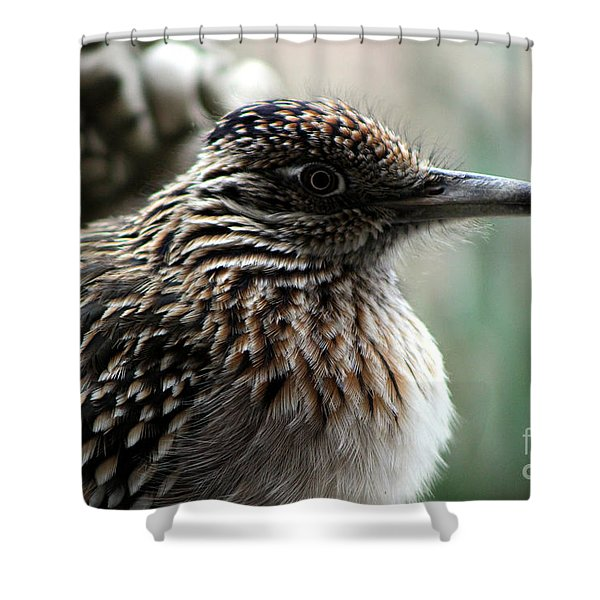 Closeup Of Road Runner By Dragon In Palm Desert Shower Curtain