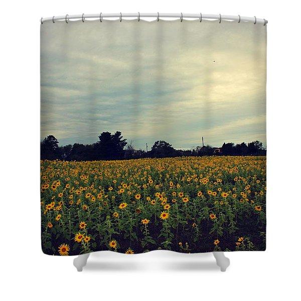 Cloudy Sunflowers Shower Curtain