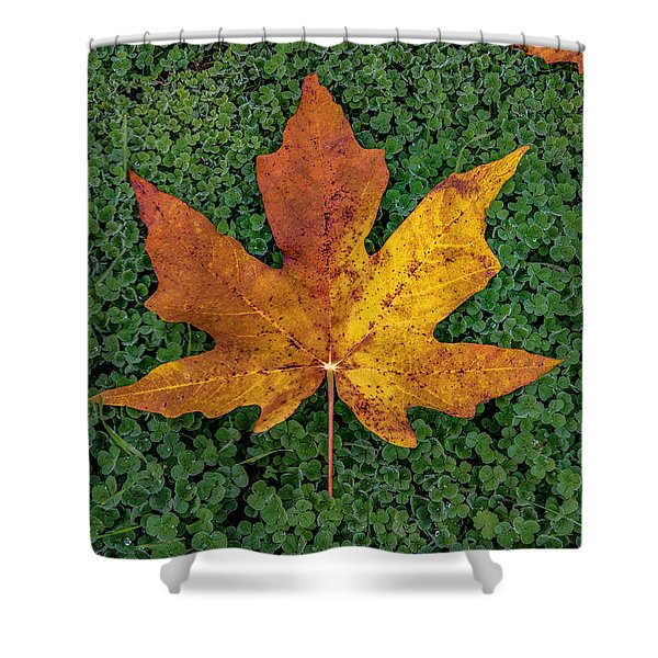 Clover Leaf Autumn Shower Curtain