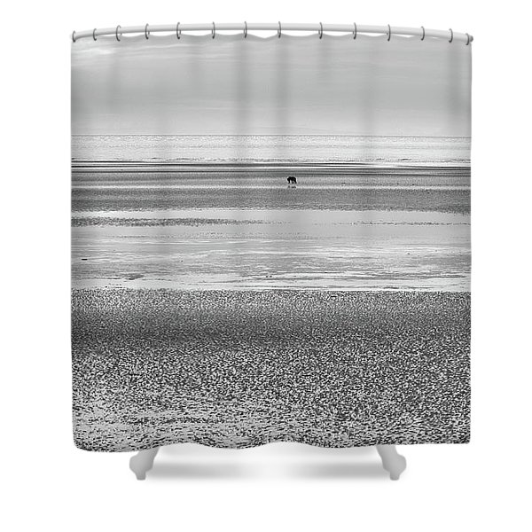 Coastal Brown Bear On  A Beach In Monochrome Shower Curtain