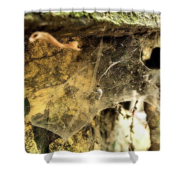 Cobweb Shower Curtain