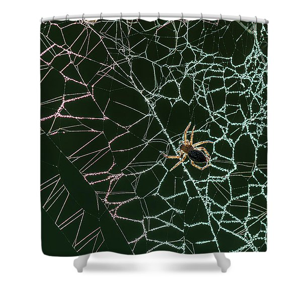 Cobwebs Creation Shower Curtain