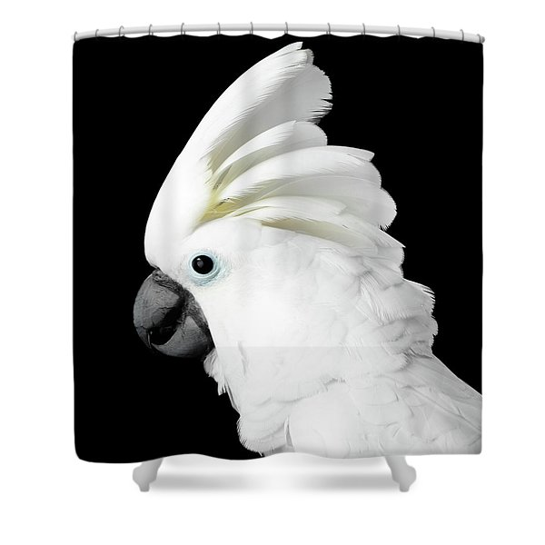 Cockatoo Alba Shower Curtain