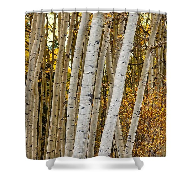 Shower Curtain featuring the photograph Colorado Aspens by Tom Gresham