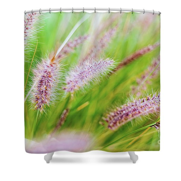 Colorful Flowers In Purple Spikes, Purple Fountain Grass, Close- Shower Curtain