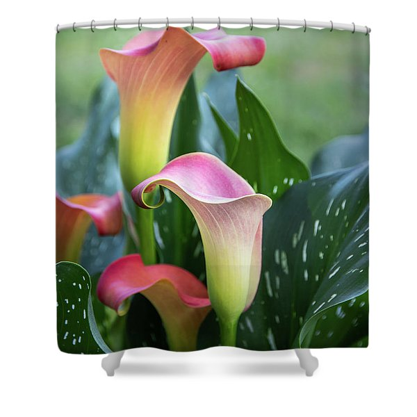 Colorful Spring Flowers Shower Curtain