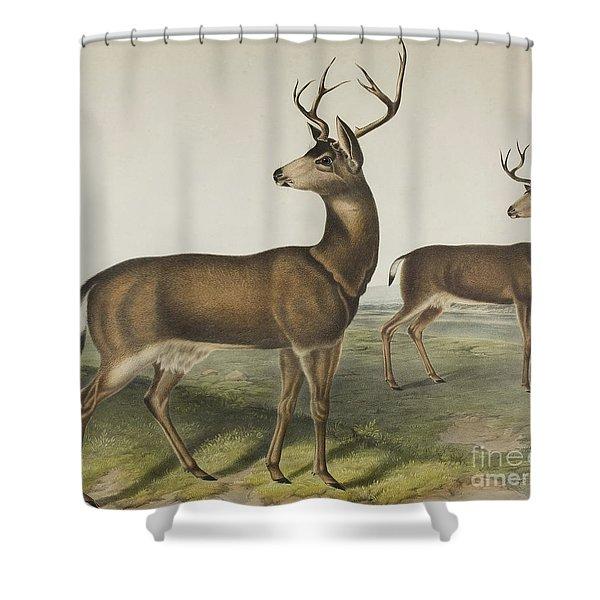 Columbian Black-tailed Deer By Audubon Shower Curtain