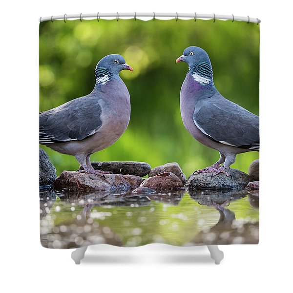 Common Wood Pigeons Meeting At The Waterhole Shower Curtain