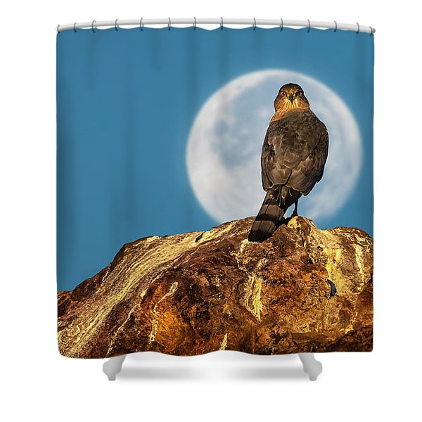 Coopers Hawk With Moon Shower Curtain