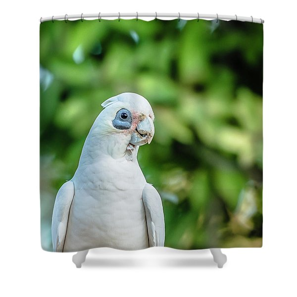 Corellas Outside During The Afternoon. Shower Curtain