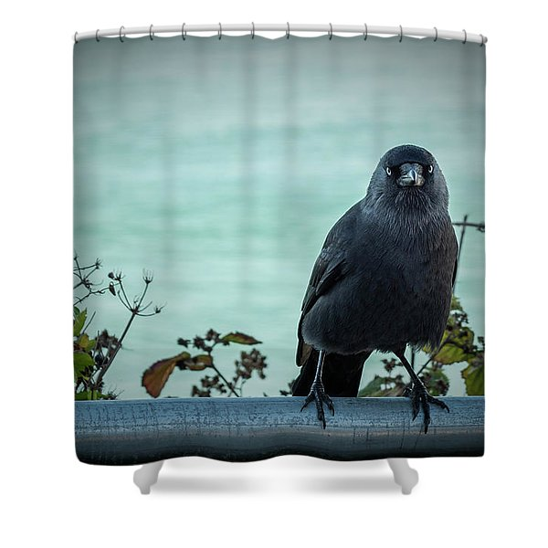 Cornish Crow Shower Curtain
