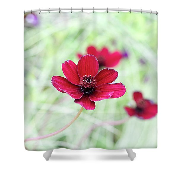 Cosmos Black Magic Flower Shower Curtain