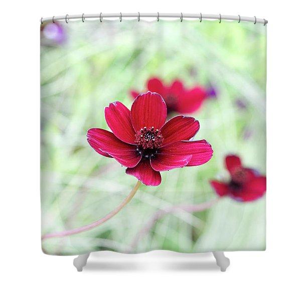 Cosmos Black Magic Flower Shower Curtain