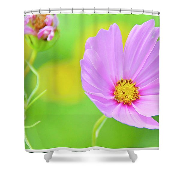 Cosmos Flower In Full Bloom, Bud Shower Curtain