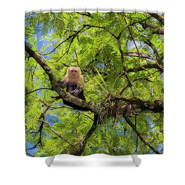 Costa Rica Capuchin Curious Monkey  Shower Curtain