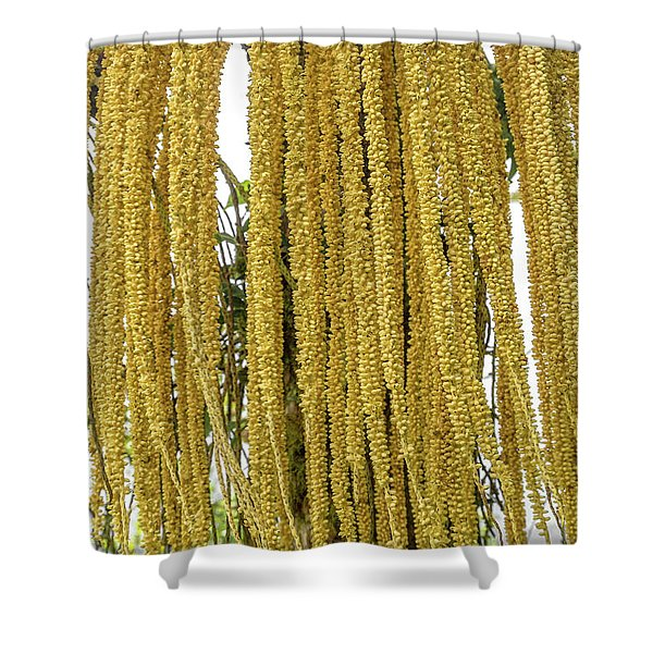 Costa Rica Hundreds Of Buds And Blooms Shower Curtain