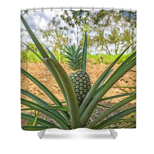Costa Rica Naturally Growing Pineapple Shower Curtain