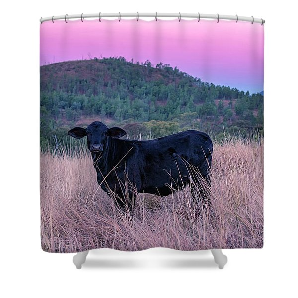 Cow Outside In The Paddock Shower Curtain