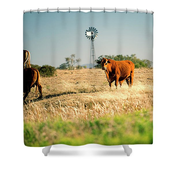 Shower Curtain featuring the photograph Cows And A Windmill In The Countryside. by Rob D Imagery