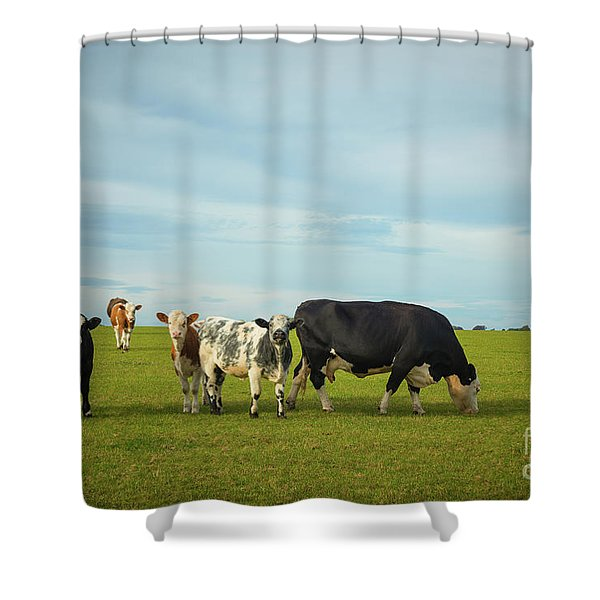 Cows Grazing In Pasture Shower Curtain