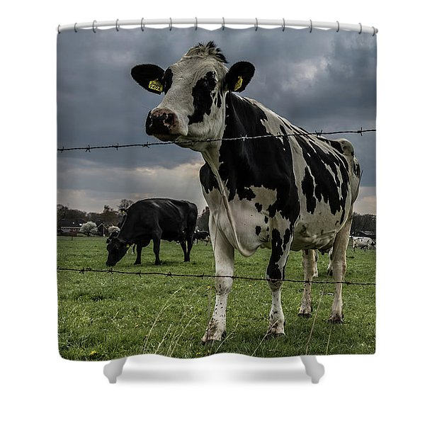 Shower Curtain featuring the photograph Cows Landscape. by Anjo Ten Kate