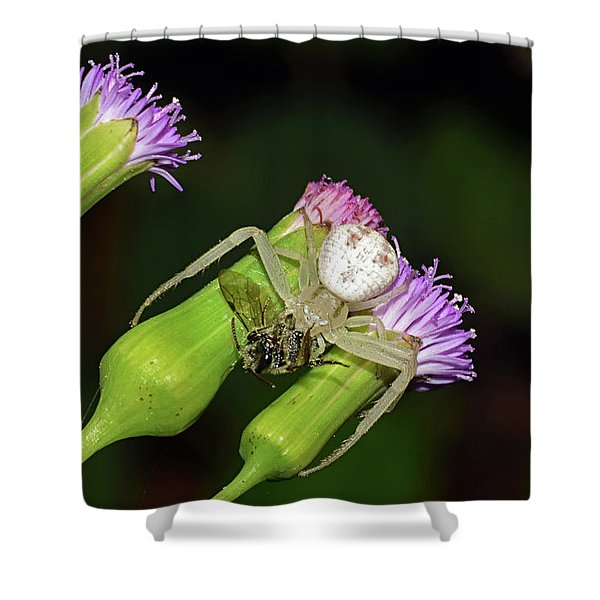 Crab Spider With Bee Shower Curtain