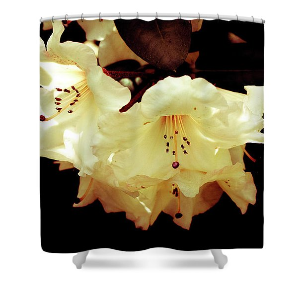 Creamy Rhododendron Shower Curtain