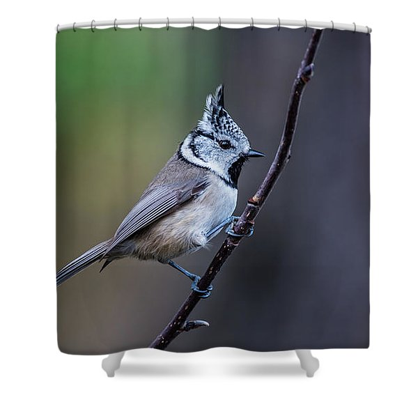 Crested Tit On A Twig Shower Curtain