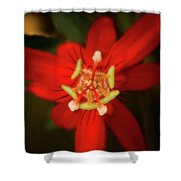 Crimson Beauty Shower Curtain