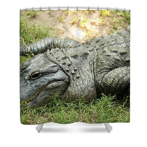 Crocodile Outside Shower Curtain