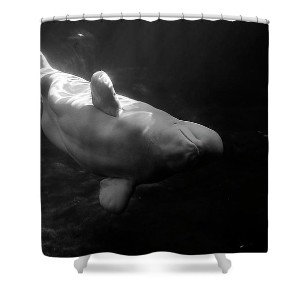 Curious Beluga Shower Curtain
