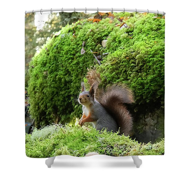 Curious Squirrel Shower Curtain