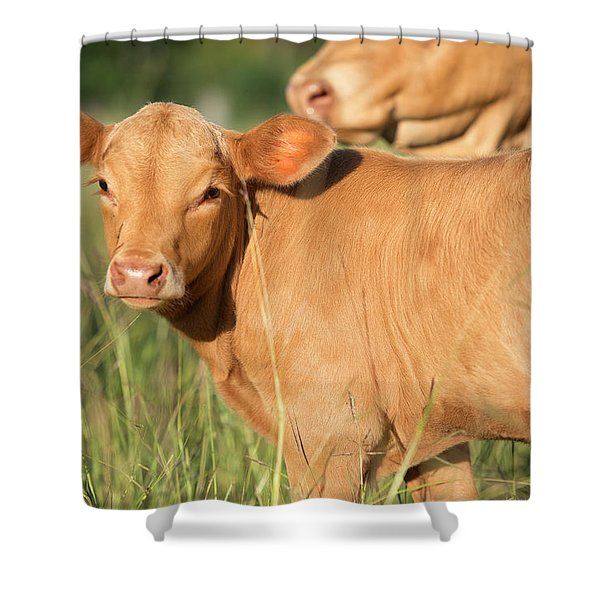 Cute Calf Shower Curtain