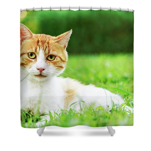 Cute Domestic Ginger Cat Relax In Outdoor Garden.  Shower Curtain