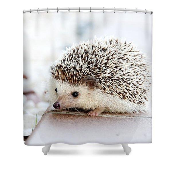 Cute Hedgeog Shower Curtain