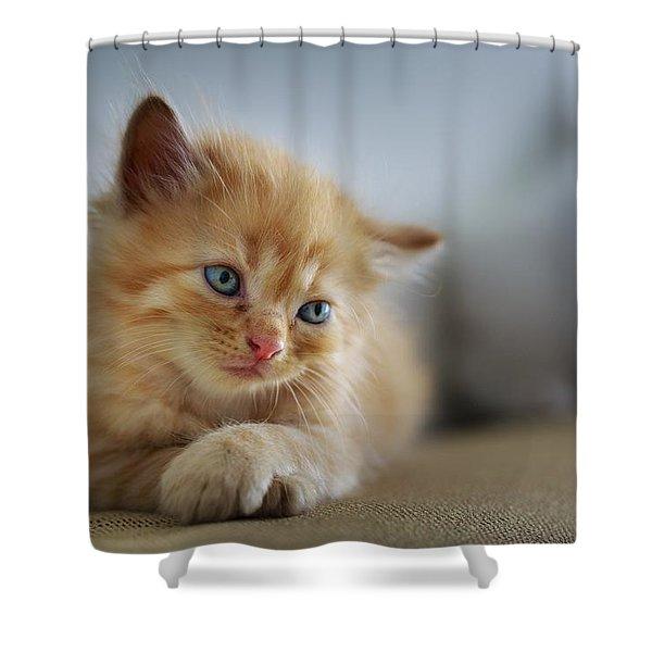 Cute Orange Kitty Shower Curtain