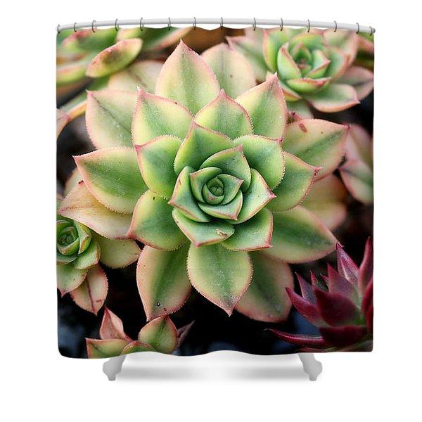 Cute Succulent Shower Curtain