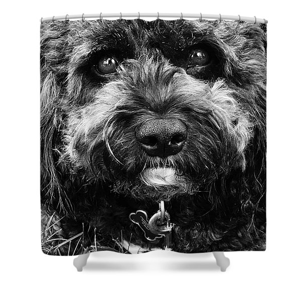 Cutest Dog On The Planet Shower Curtain