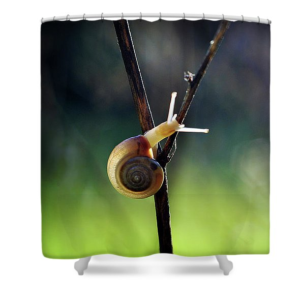 Cutie Pie Shower Curtain
