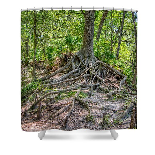 Cypress Roots Exposed Shower Curtain