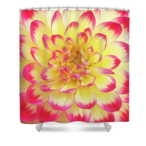 Dahlia Kenora Wow Flower Shower Curtain