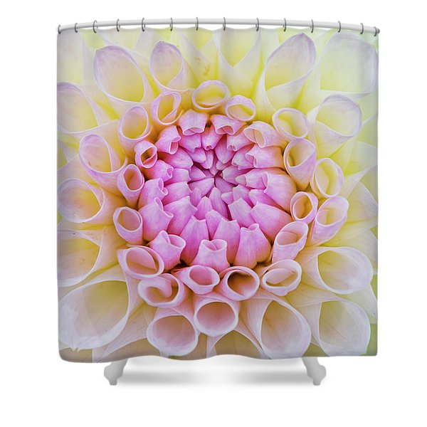 Dahlia Ryecroft Brenda T Flower Shower Curtain