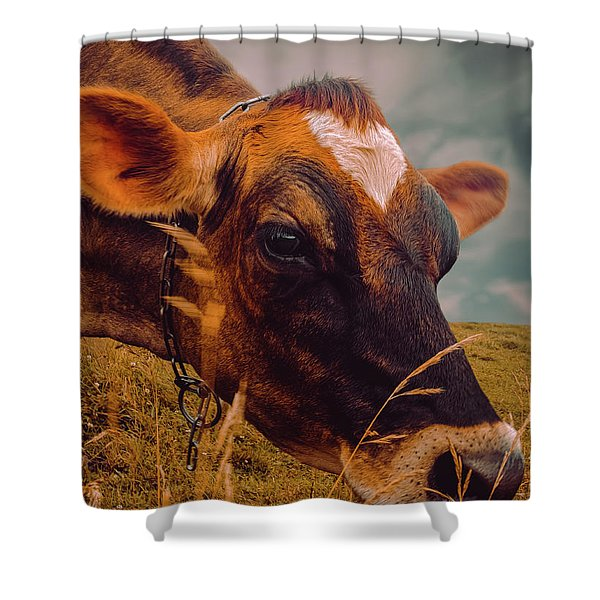 Dairy Cow Eating Grass Shower Curtain
