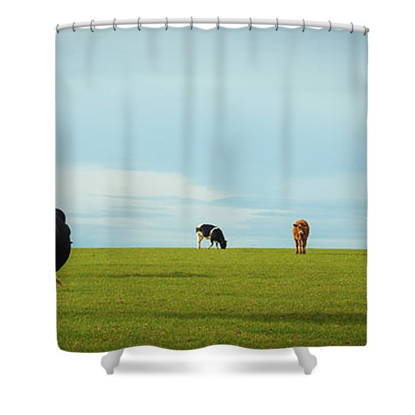 Dairy Cows In Pasture Shower Curtain