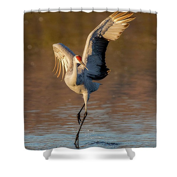 Dance Of The Sandhill Crane Shower Curtain